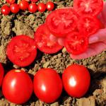 Akira Seeds