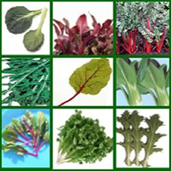 Verduras de hoja